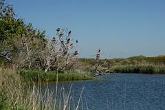 DSC00339 (Evert Bosdriesz) Tags: netherlands nederland castricum noordhollands duinreservaat