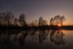 di riflesso (mat56.) Tags: trees sunset sun alberi reflections river landscape tramonto fiume atmosphere po antonio sole riflessi paesaggi atmosfera lombardia lodi pianura lodigiano padana sennalodigiana mat56 romei