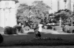 Trmula (glauberpitfall) Tags: park bw sun film 35mm blurry grain portoalegre ishootfilm shade filmcamera contras filmphotography filmisnotdead
