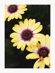 Flora and Fauna at Santana Row (bnishimoto) Tags: flower color fuji bayarea fujifilm santanarow 60mm floraandfauna photoessay xt1 ontherow
