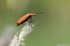 DN9A8615 (Josette Veltman) Tags: macro nature canon bug natuur bugs photowalk lente zwolle landschap insecten ivn westerveldsebos photowalkzwolle