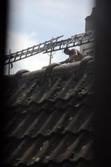 _DSC0087 () Tags: wood sun rooftop window soleil nikon dijon framed working structures roofs tiles boulot travail frame heat nophotoshop bourgogne hardwork fentre vue contrejour carpenter 18105 lockedup tbag toits charpentier chaleur chelle charpente mtier laders tuiles d90 monter clime encadr nikond90 bagoft