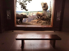 Mama, can I sit on THAT bench? (JFGryphon) Tags: bench bears wyoming diorama grizzlybear badnewsbears yellowstonepark