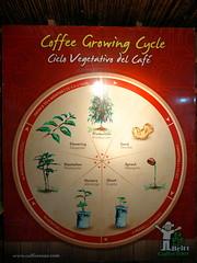 P1140616 (lychee_vanilla) Tags: costarica heredia coffeetour cafbritt