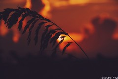 Miami Sunrise.  (gusdiaz) Tags: sunrise miami beach fl bokeh sun vacation summer beautiful colorful amanecer canon vacaciones mar arena sol hermoso colorido
