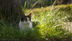 Cats & Roses (peterbastingsfotografie) Tags: katten thuis lente leicam9 peterbastings lente2016