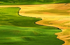 IMG_7634_Contours of Palouse. (lada/photo (on a road)) Tags: thepalouse easternpartofwashstate birdseyeview ladaphoto fields