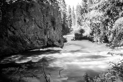 Benham Falls (Class 5 Rapids) (pillarsoflight) Tags: bw blackandwhite monochrome desaturated grey black gray white pnw beauty apsc crop sensor nikon d3300 28mm 28 visitor filmlens classicaperture prime lightroom adobe shotonsandisk sandisk apple imac pacificnorthwest nik rapids river trees blur longexposure silk smooth ndfilter rocks stones branches water cracks