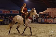 Salon du cheval de Hannut (NosChevaux.com) Tags: horses horse cheval pre chevaux paard paarden spectacle poney dressage frison quitation salonducheval hannut spectaclequestre