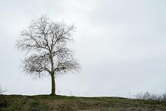 Дерево. Южное Приильменье.
