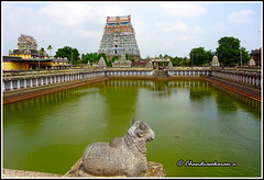 5176 - Chidambaram Sivaganga tank (chandrasekaran a) Tags: travel india heritage architecture culture traditions temples hinduism tamilnadu chidambaram saivism templeart lordsiva gopurams sabhas nayanmars