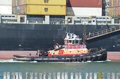 Liberty (jelpics) Tags: ocean sea boston port liberty harbor boat ship massachusetts vessel tug containership bostonma tugboats msc bostonharbor cargoship merchantship conleyterminal msclorena