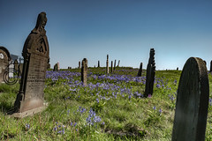 Headstones and Bluebell's 5 (View From The Chair Photography) Tags: bluebells landscape headstones bluesky floweres summergraveyard
