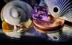 Reflecting on Amethyst and Seashells (Charles Opper) Tags: light shells color macro reflection nature seashells canon spring penny amethyst macromondays