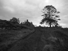 House and tree (Simon Varwell) Tags: knoydart airor