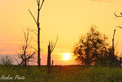 sunset at oostvaardersplassen