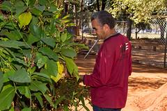 Viveiro-16 (Secom UnB) Tags: plantas jardim prc antonio jardins estufa prefeitura viveiro mudas antnio jardinagem campusdarcyribeiro
