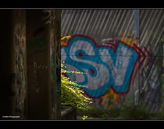 *MOOS* 1.1.16 (geka_photo) Tags: gekaphoto kiel schleswigholstein deutschland ostufer ellerbek unterführung licht grün graffiti