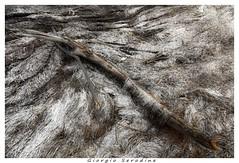 laguna grado (Giorgio Serodine) Tags: ramo alghe mare laguna grado grandangolo canon