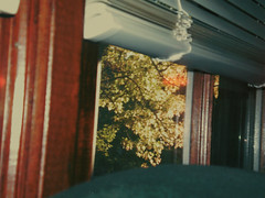 bear with me (nikkivercetti) Tags: vsco a4 vintage analog film light leaks couch window blinds wood frame trees georgia october fall 2016 autumn