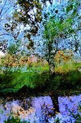 after nature (eyeamsterdam) Tags: awardtree nature artwork