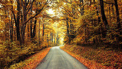 Autumn Journey XVII. (Zsolt Zsigmond) Tags: autumn fall trees road yellow forest light landscape landschaft colour bright walk picture day exposure trail nikkor colours flickr nature tree