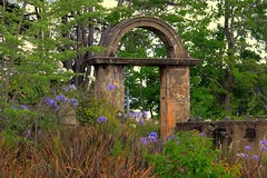 Chateau Napier (Merryjack) Tags: door agapanthus arch