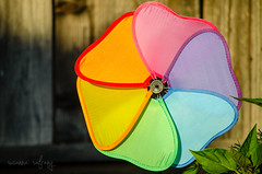 p365/126. (Pics by Susanna) Tags: color windmill toy colorful wind hour childs day126 lightgolden day126365 365the2015edition 3652015 toypopping colorsgardensunset 6may15