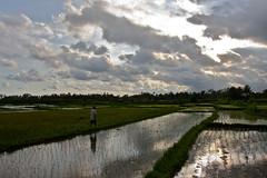 Bali - Ubud (michael_jeddah) Tags: bali clouds indonesia wolken reis agriculture cloudporn paddyfields reisfeld