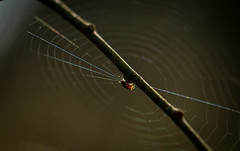 Spider's web (Tomas hberg) Tags: macro insect spider web center spindel nt spindelnt