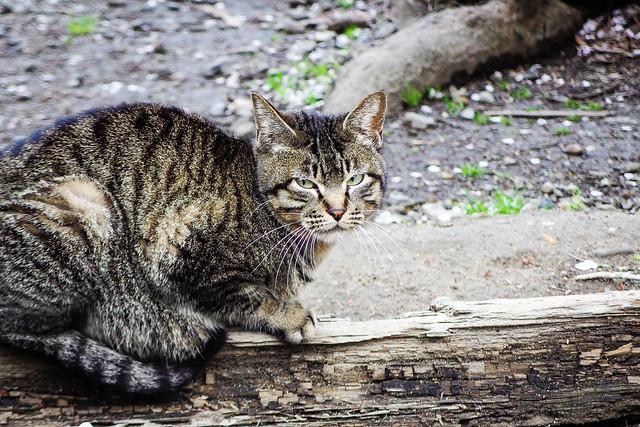 Today's Cat@2015-04-09