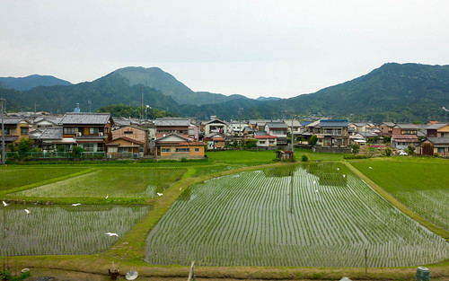 Train view, rice fields