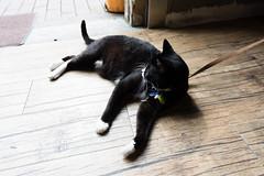 20160507-DSC_0677 (Noelas) Tags: cat ed nikon 05 taiwan nikkor dslr  miaoli 07 afs   f3545g   1835 2016  1835mm d810 shengxingstation   nikond810 1835g nikonafsnikkor1835mmf3545ged