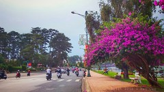 #dalat #vietnam #travel #hometown #wander #peace #beautiful #view #love #lake #street #daily #life #motorbike #pink #landscape  #green #HC_photo #myphoto #myphone #lg_g3 (Hi_Cao) Tags: life street travel pink lake green love beautiful landscape peace view hometown daily vietnam motorbike dalat myphoto wander myphone hcphoto lgg3