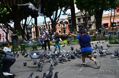 Niez (Azrael Acosta) Tags: childhood colours aves juego puebla infancia nio zocalo mxico