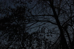 (Evgeny_Ukhov) Tags: tree foto outdoor minimalism outdoo