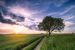 somewhere only we know (Dg.63) Tags: sunset tree nature canon ngc auvergne 6d 1635 limagne