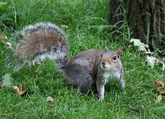 Huh? (phoebe.horner) Tags: park trees people white black colour tree monochrome fence landscape photography landscapes photo photographer view edited greenwich royal parks fences squirrell cutty sark