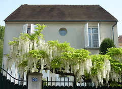 Lovely white wisteria on a fence in front of a Sceaux house (Monceau) Tags: white house france fence wisteria sceaux