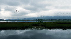 Tempest (charhedman) Tags: sky water birds clouds reflections stormy marsh pittlake pittmeadows