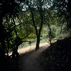 Hillside Trail (Colton Davie) Tags: california trees tree 120 film june kodak roadtrip trail pch russianrivervalley colornegative iso160 portra160 riverfrontregionalpark 6x6cm 2013 rolleicordiii