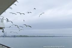 _TKF6090 (Tjeerdknierfotografie) Tags: meeuwen texel veerboot