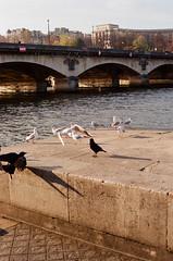 Aves (Rodrigo Piedra) Tags: birds puente aves pars pontdina