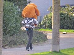 friends (Mattijsje) Tags: bear cute beer walking teddy hond spaziergang teddybeer uitlaten
