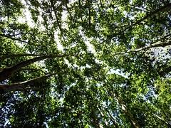 Looking up (zhadjam) Tags: nature flickrnature natre photography surreal abstract trees green