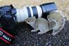Playful Baby Grey Squirrel (lens buddy) Tags: uk england cute closeup squirrel devon playful babysquirrel closeencounter bicton eosdigital bictongardens