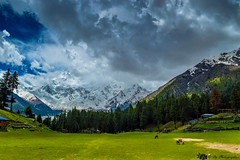 A meadow (bilalqasim) Tags: pakistan green beautiful clouds meadow nangaparbat killermountain fairymeadows gilgitbaltistan