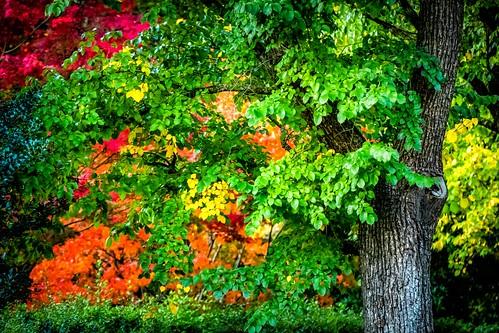 Mt Macedon Autumn Colours-22