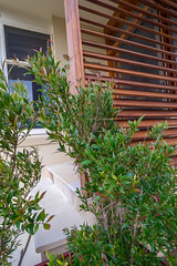 Eye Design Landsdcapes-15 (Broken Tree) Tags: landscapes landscaping manly sydney fencing palmbeach avalon monavale deewhy brookvale northernbeaches landscapedesign curlcurl whalebeach balgowlah outdoorkitchens outdoorrooms poollandscapes mansheds