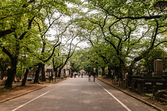 Yanaka cemetery (TheSpaceWalker) Tags: japan cherry photography japanese tokyo photo nikon pic 1750 tamron cherrytrees yanaka d300 yanakacemetery